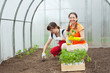 women planting   in greenhouse