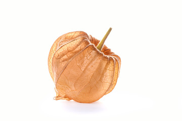 Physalis fruit, closed