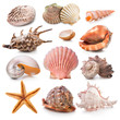 Seashell collection - 45367243