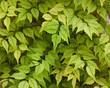 фон листья