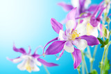 beautiful flower on sky background-