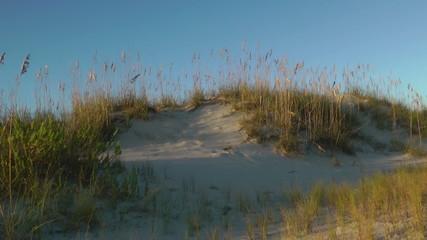 Sea oats dunes