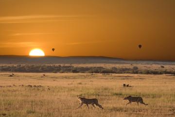 Alba africana con ghepardi a caccia