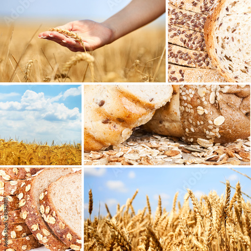 Collage wheat