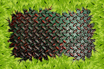 Grunge diamond  metal plate and green grass frame used backgroun