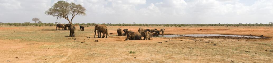 Elephants drinking in the bush