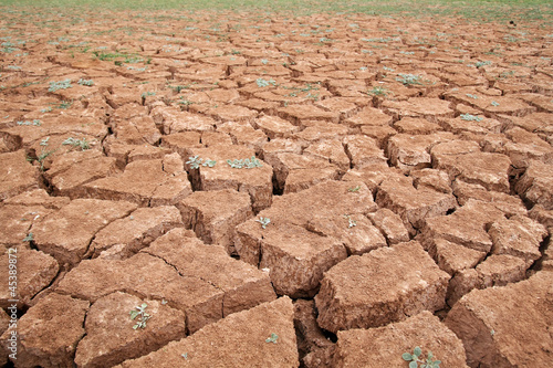 Drought - 45389872