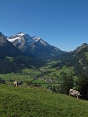 Gsteig Bei Gstaad, Oldenhorn And Cows