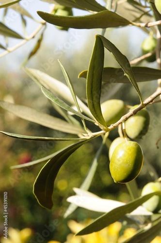 olive extravergini
