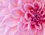 Fototapete Blüten - Natur - Blume