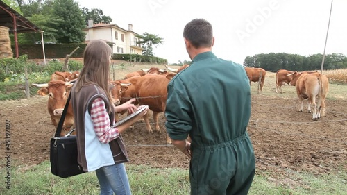 Veterinarian visiting cow breeder