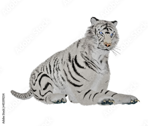White tiger relaxing