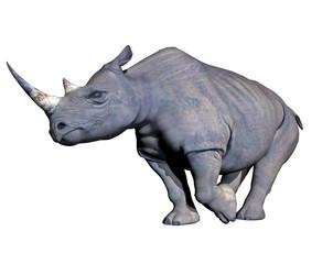 Rhinoceros charging