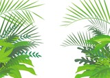 Fototapety tropical forest background