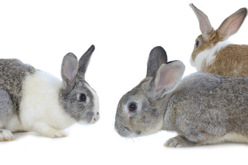 Close up cute three rabbits