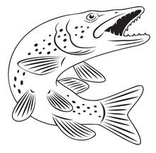 Szczupak ryb