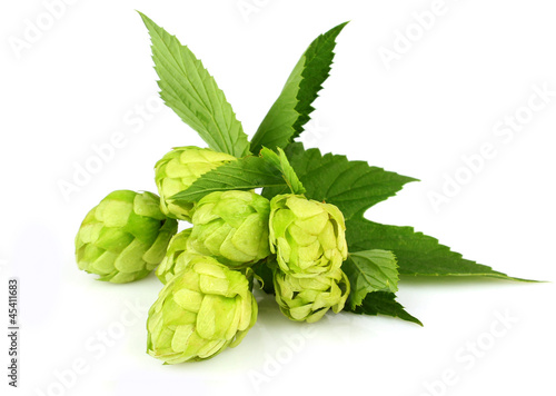 Hops isolated on a white background - 45411683