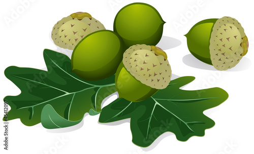 acorns vector isolated on white background
