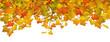 Herbstblätter, Blätter, Hintergrund, Banner, Panorama, Webdesign