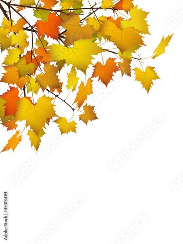 Herbstblätter, Herbst, Blätter, Hintergrund, Postkarte, Autumn