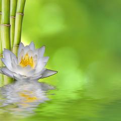 nenufar con bambú y fondo verde con reflejo