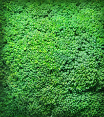 Broccoli background