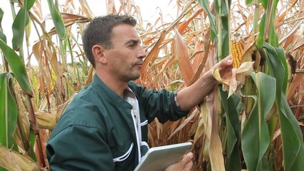 Farmer checking on corn crops