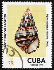 Postage stamp Cuba 1978 Liguus Fasciatus Fasciatus, Sea Shell