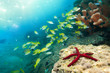 stunning red starfish and snappers