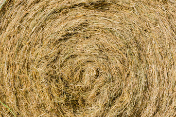 Round straw bale with texture for background