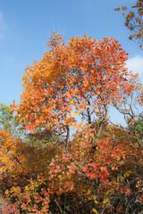 Sommacco del Carso d'autunno. Sentiero di Rilke - Duino