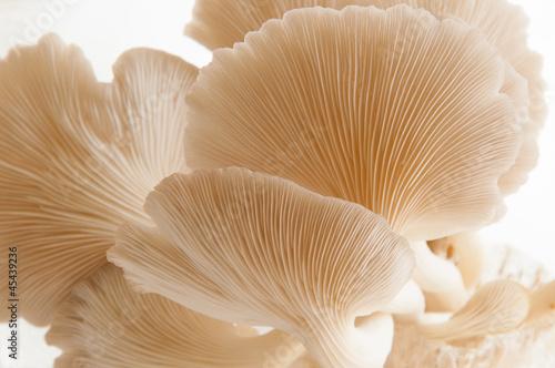 Organic Mushroom - 45439236