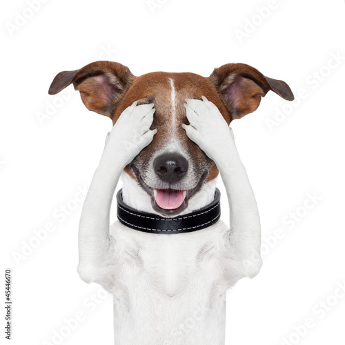 canvas print picture hiding covering eye dog