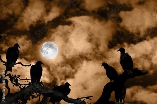 Vultures silhouetted against a full moon and spooky orange sky