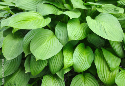 Texture-full leaves background