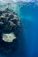 Beautiful coral reef near the Dahab city of Egypt