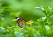 butterfly over a flower and green background