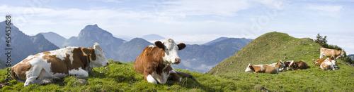Foto op Aluminium Koe kühe in den bayrischen alpen mit breitenstein im hintergrund