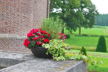 Flowers in the castle Heeswijk . Netherlands