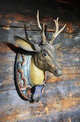 Trophy on a wooden wall of a lodge