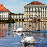 Swans of Nymphenburg castle in Munich