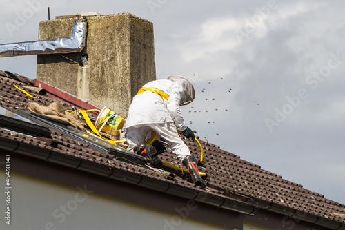 Leinwanddruck Bild Hornissennest / Insektennest Entfernung