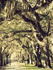 Trees in downtown of Savannah