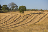 wheat harvest, fields and landscapes
