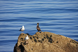 cormorant and seagull