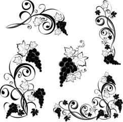 Grapevine. Vector wine design elements.