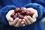 little hands with chestnuts