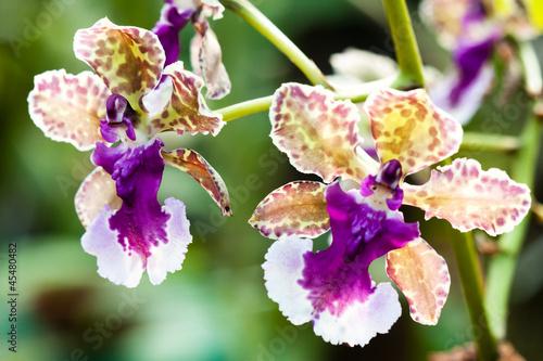 Fototapeten,orchidee,tropisch,exotisch,blume