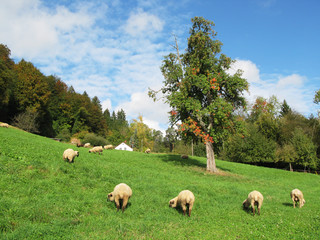 Swiss autumn scenery