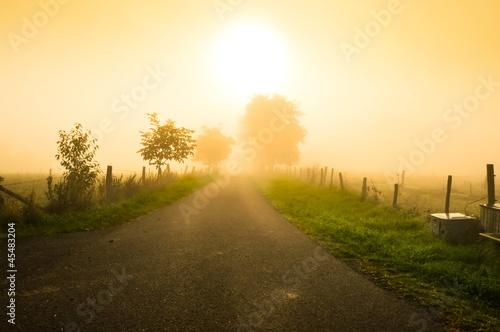 Fototapeten,nebel,herbst,landschaft,natur